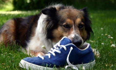 Animali domestici: siete davvero pronti? Ecco cosa vi aspetta...