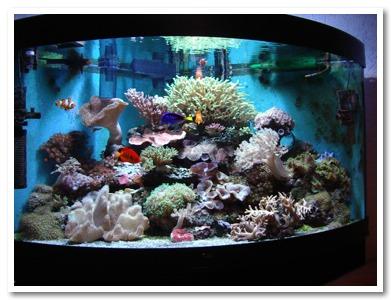 Un acquario per i bambini mamme magazine for Acquario in casa
