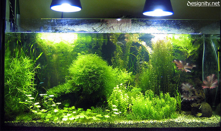 Illuminazione acquario dolce illuminazione acquario tutto quel