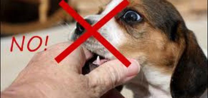 come evitare i morsi del cane mamme magazine On sognare di essere morsi da un cane
