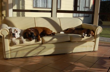Come tenere cane in appartamento mamme magazine for Cani da tenere in casa