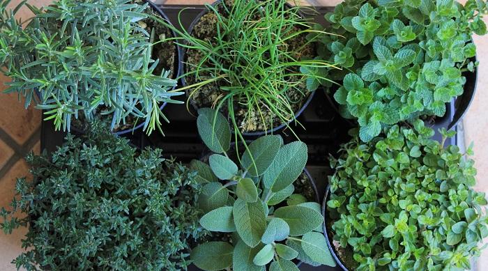 Come coltivare le erbe aromatiche in giardino mamme magazine - Coltivare piante aromatiche in casa ...