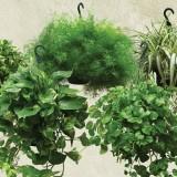 piante-da-appartamento_O2