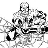 disegnare e colorare immagini di Spiderman