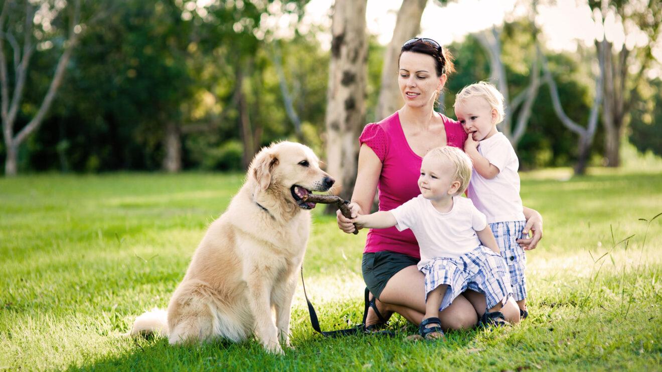Quali sono i migliori animali domestici per i bambini for Quali sono i rettili