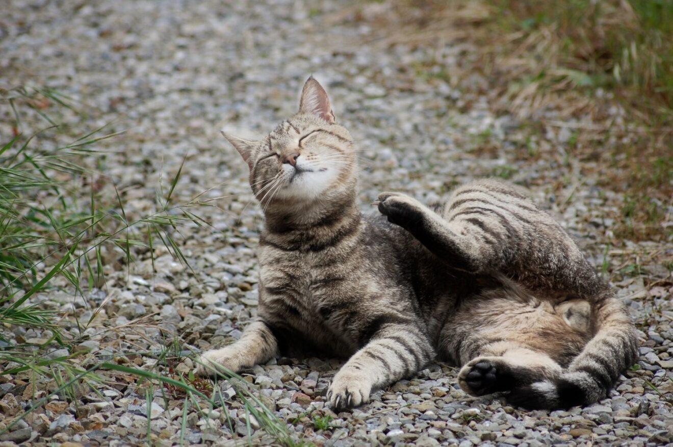 Pulci e zecche sui vostri animali: perché consultare il veterinario