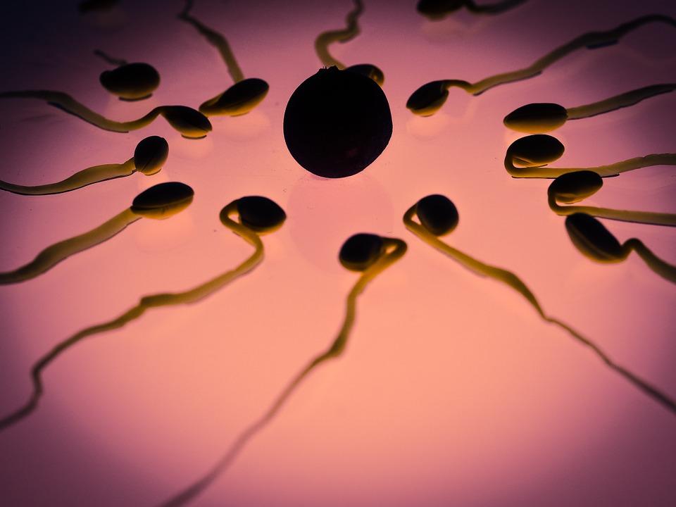 periodo fertile